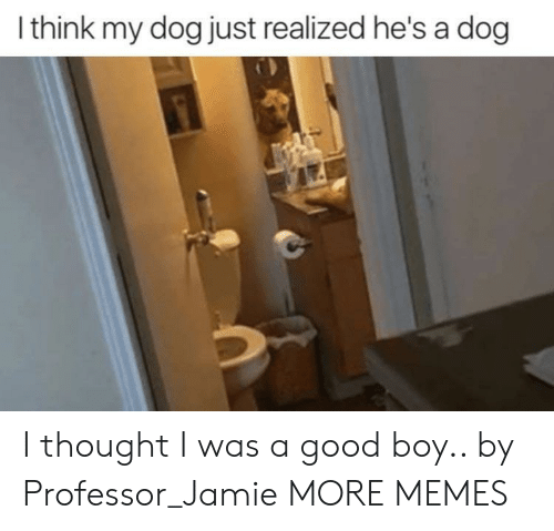 Dank, Memes, and Target: I think my dog just realized he's a dog I thought I was a good boy.. by Professor_Jamie MORE MEMES