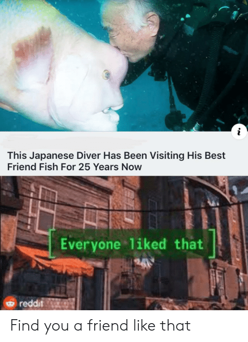 I This Japanese Diver Has Been Visiting His Best Friend Fish