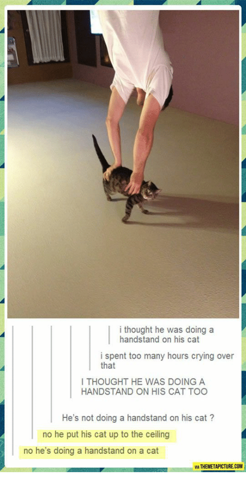 I Thought He Was Doing A Handstand On His Cat I Spent Too Many Hours