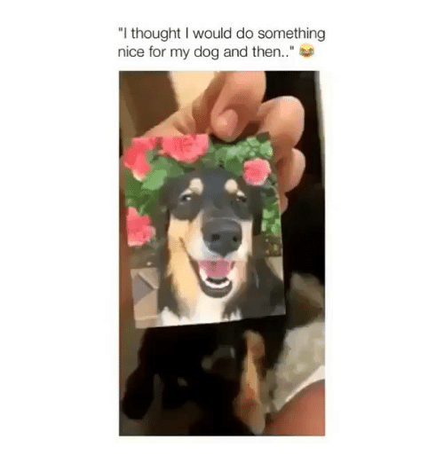 "Memes, Thought, and Nice: ""I thought I would do something  nice for my dog and then.."""