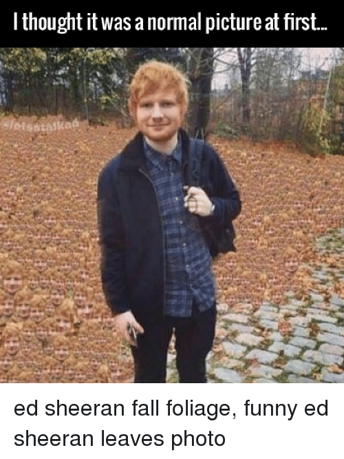 I Thought It Was A Normal Picture At First Ed Sheeran Fall