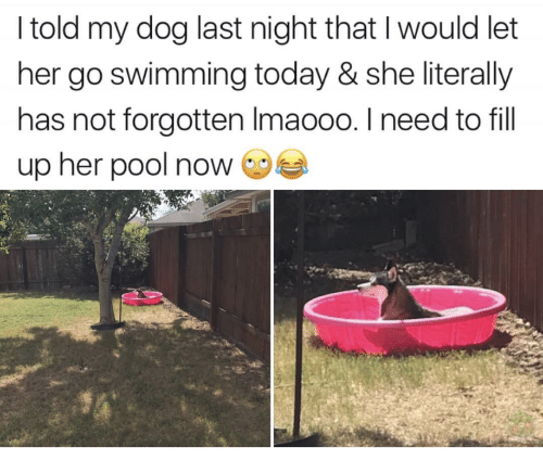 Pool, Today, and Swimming: I told my dog last night that I would let  her go swimming today & she literally  has not forgotten Imaooo. I need to fill  up her pool now