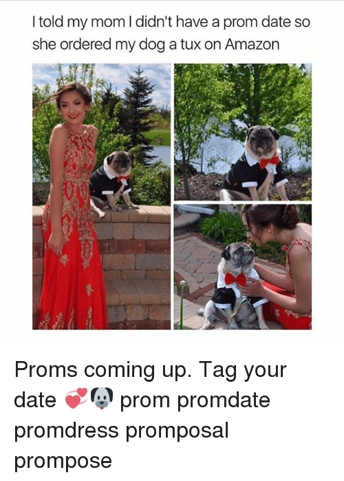 Amazon, Memes, and Date: I told my mom I didn't have a prom date so  she ordered my dog a tux on Amazon Proms coming up. Tag your date 💞🐶 prom promdate promdress promposal prompose