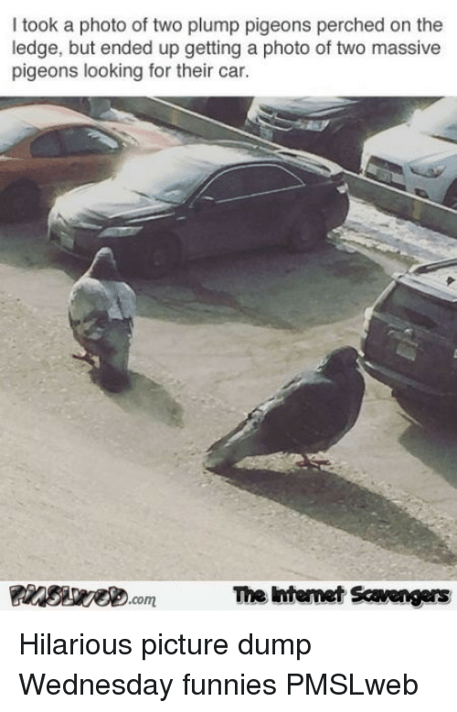 Wednesday, Hilarious, and Car: I took a photo of two plump pigeons perched on the  ledge, but ended up getting a photo of two massive  pigeons looking for their car.  The Intemet Scavengers <p>Hilarious picture dump  Wednesday funnies  PMSLweb </p>