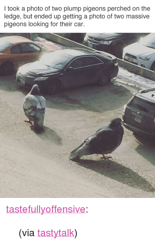 """Reddit, Target, and Tumblr: I took a photo of two plump pigeons perched on the  ledge, but ended up getting a photo of two massive  pigeons looking for their car. <p><a href=""""http://tumblr.tastefullyoffensive.com/post/171592304778/via-tastytalk"""" class=""""tumblr_blog"""" target=""""_blank"""">tastefullyoffensive</a>:</p> <blockquote><p>(via <a href=""""https://www.reddit.com/user/TastyTalk"""" target=""""_blank"""">tastytalk</a>)</p></blockquote>"""