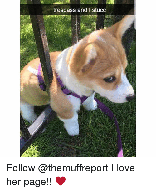 Love, Memes, and 🤖: I trespass and I stucc Follow @themuffreport I love her page!! ❤