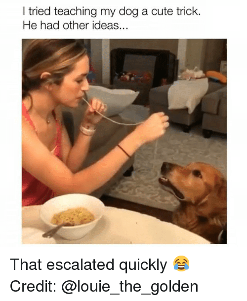 Cute, Memes, and Louie: I tried teaching my dog a cute trick  He had other ideas. That escalated quickly 😂 Credit: @louie_the_golden
