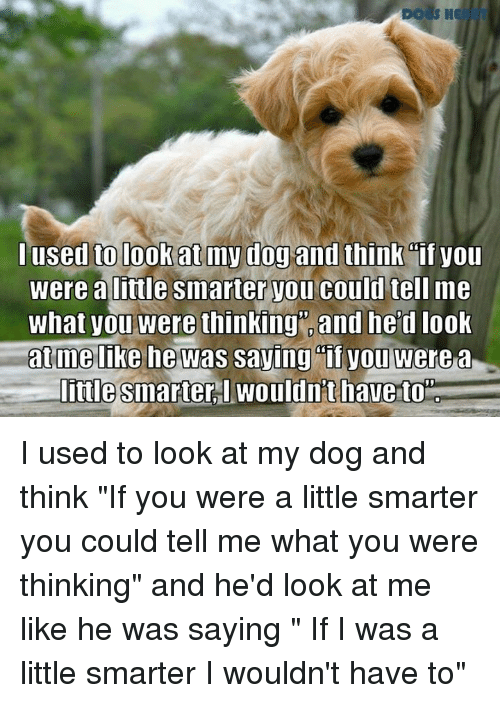used to be my dog