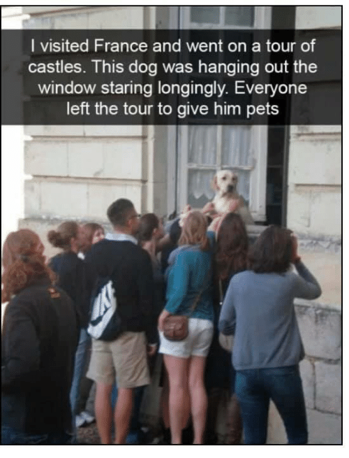 Memes, Pets, and France: I visited France and went on a tour of  castles. This dog was hanging out the  window staring longingly. Everyone  left the tour to give him pets