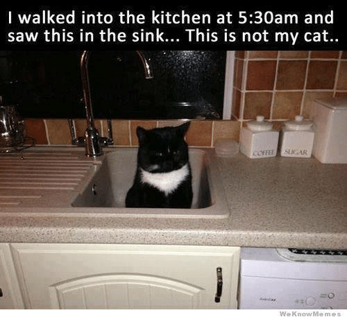 Memes, Saw, and Sugar: I walked into the kitchen at 5:30am and  saw this in the sink... This is not my cat..  SUGAR  We Know Memes