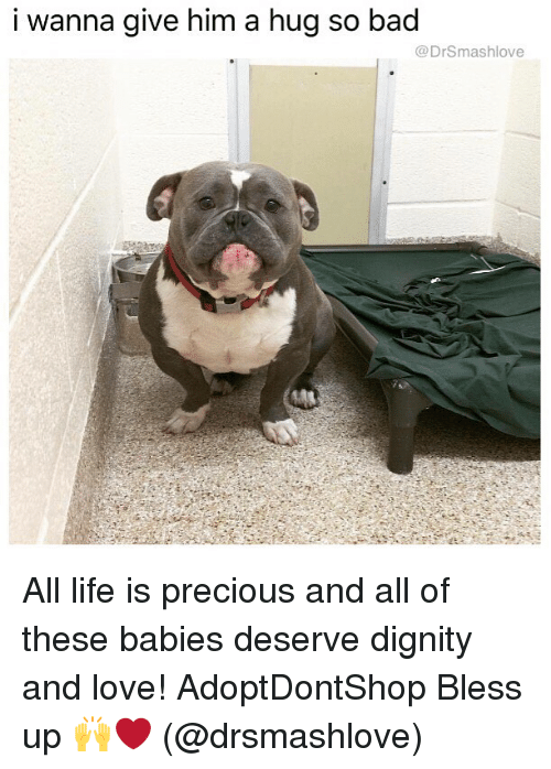 Bad, Bless Up, and Life: i wanna give him a hug so bad  @DrSmashlove All life is precious and all of these babies deserve dignity and love! AdoptDontShop Bless up 🙌❤️ (@drsmashlove)