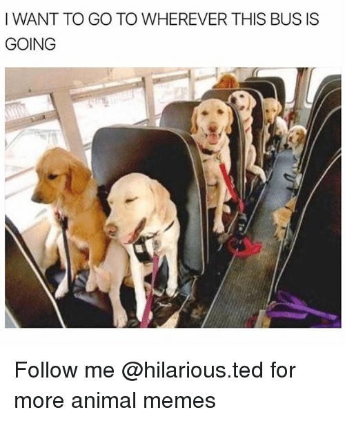 Funny, Memes, and Ted: I WANT TO GO TO WHEREVER THIS BUS IS  GOING Follow me @hilarious.ted for more animal memes
