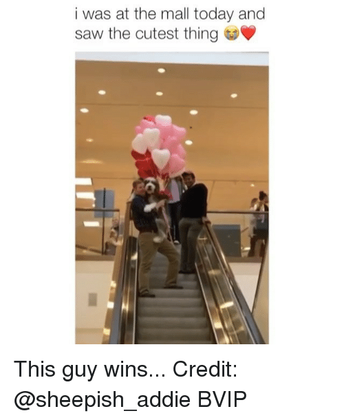 Memes, Saw, and Today: i was at the mall today and  saw the cutest thing This guy wins... Credit: @sheepish_addie BVIP