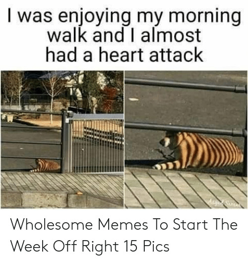 Memes, Heart, and Wholesome: I was enjoying my morning  walk and I almost  had a heart attack Wholesome Memes To Start The Week Off Right 15 Pics