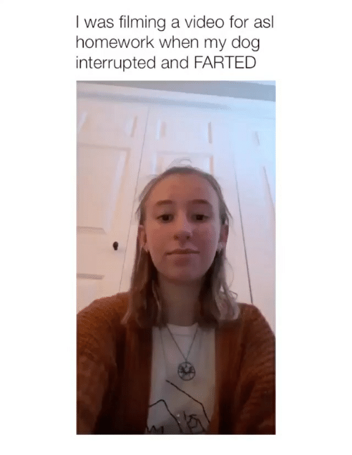 Video, Homework, and Girl Memes: I was filming a video for asl  homework when my dog  interrupted and FARTED
