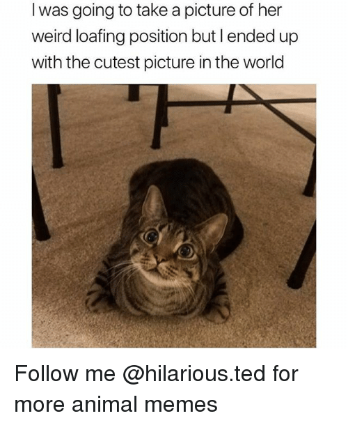 Funny, Memes, and Ted: I was going to take a picture of her  weird loafing position but l ended up  with the cutest picture in the world Follow me @hilarious.ted for more animal memes