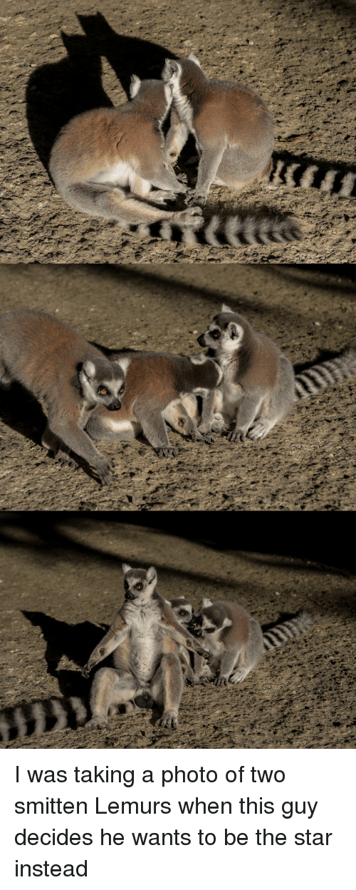 I Was Taking A Photo Of Two Smitten Lemurs When This Guy Decides He