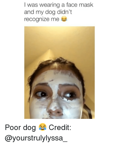 Memes, Mask, and 🤖: I was wearing a face mask  and my dog didn't  recognize me 부 Poor dog 😂 Credit: @yourstrulylyssa_