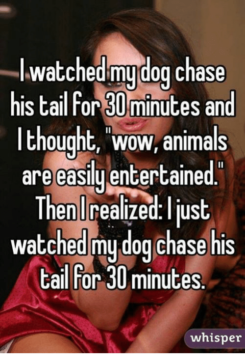 Animals, Dogs, and Memes: I watched my dog chase  his tailfor 30minutes and  thought, WOW, animals  are easily entertained  Then realized. Ilus  watched my dog chase his  tail For 30 minutes  whisper