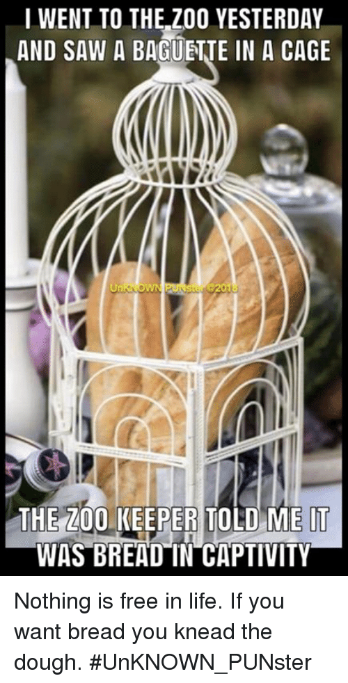 Bailey Jay, Life, and Memes: I WENT TO THE Z00 YESTERDAY  AND SAW A BAGUETJE IN A CAGE  THE 200 KEEPER TOLD ME IT  WAS BREAD IN CAPTIVITY Nothing is free in life. If you want bread you knead the dough. #UnKNOWN_PUNster