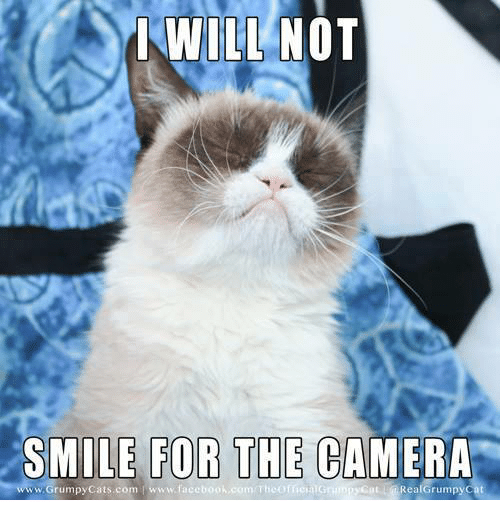 Grumpy Cat, Cat, and  Smile for the Camera: I WILL NOT  SMILE FOR THE CAMERA  www.Grumpy Cats com www.faceb  Real Grumpy Cat