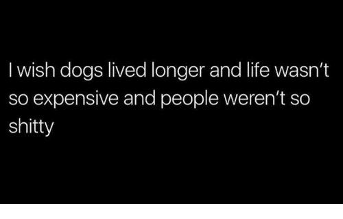 Dogs, Life, and Humans of Tumblr: I wish dogs lived longer and life wasn't  so expensive and people weren't so  shitty