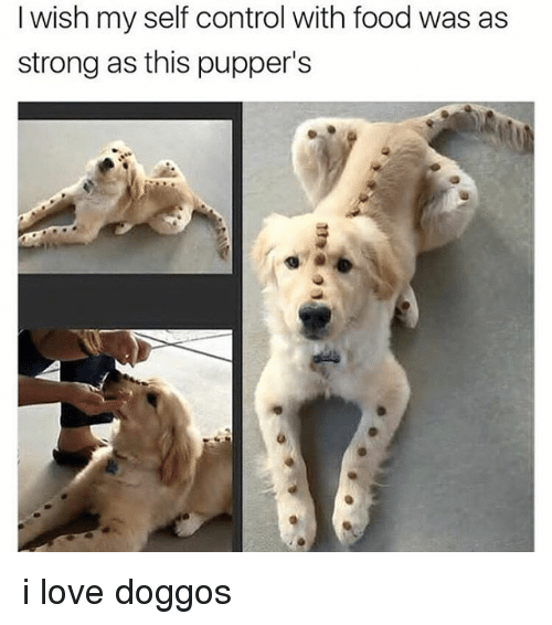 Food, Love, and Memes: I wish my self control with food was as  strong as this pupper's i love doggos