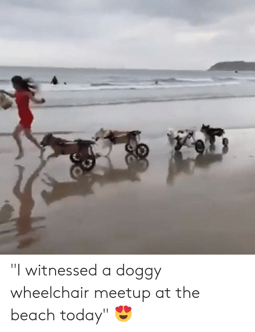 """Beach, Meetup, and Today: """"I witnessed a doggy wheelchair meetup at the beach today"""" 😍"""