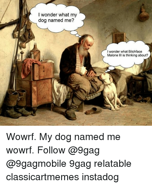 9gag, Memes, and Relatable: I wonder what my  dog named me?  I wonder what Bitchface  Malone III is thinking about? Wowrf. My dog named me wowrf. Follow @9gag @9gagmobile 9gag relatable classicartmemes instadog