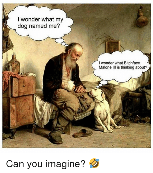 Memes, Wonder, and 🤖: I wonder what my  dog named me?  I wonder what Bitchface  Malone III is thinking about? Can you imagine? 🤣