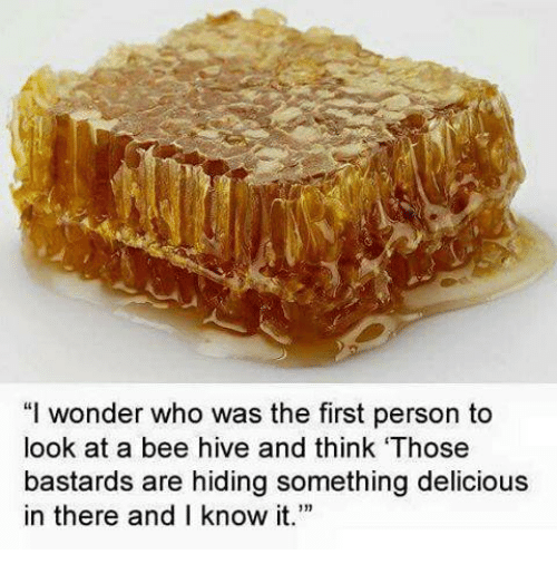 "Memes, Wonder, and 🤖: ""I wonder who was the first person to  look at a bee hive and think 'Those  bastards are hiding something delicious  in there and I know it."