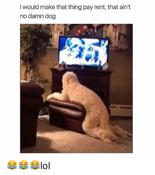 Memes, 🤖, and Dog: I would make that thing pay rent, that ain't  no damn dog 😂😂😂lol