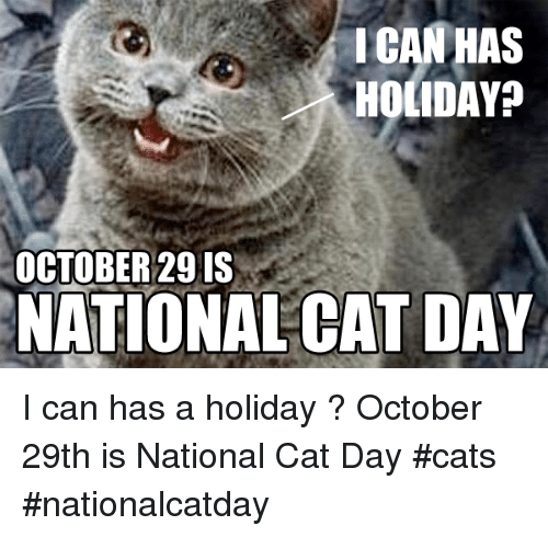 Ican Has Holiday October 29 Is National Cat Day I Can Has A Holiday October 29th Is National Cat Day Cats Nationalcatday Cats Meme On Me Me