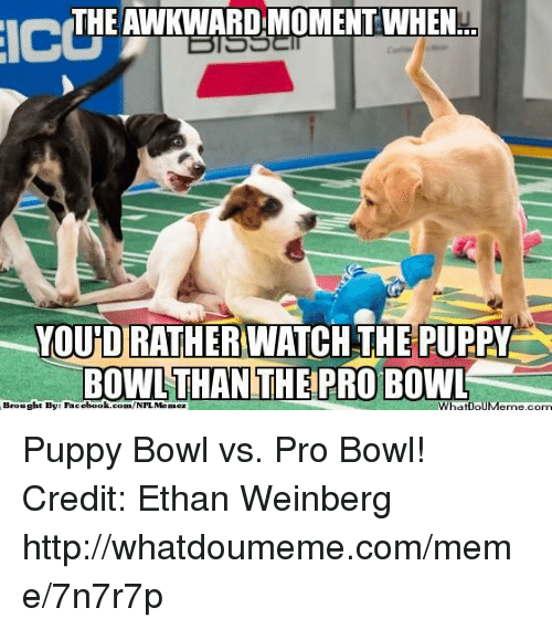 icdthe theawkwardmomentwhen youndiratherunatch the puppy bowl than theipro bow brought 18399342 25 best puppy bowl memes jobbing memes, my dreams memes, to do