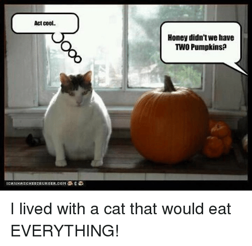 ICE Act Cool Honey Didn\u0026#39;t Wehave TWO Pumpkins? I Lived ...