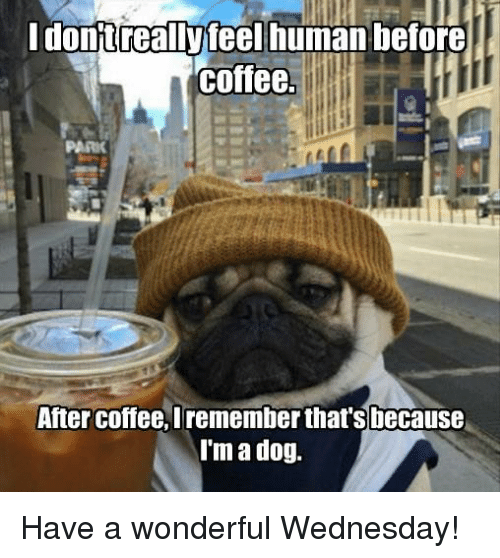 Memes, Coffee, and Wednesday: Idonjtreallyteel human before  coffee.  PARIK  After coffee, Iremember that's because  I'm a dog. Have a wonderful Wednesday!