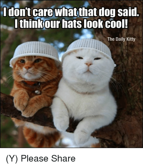 Memes, Cool, and 🤖: Idon't care what that dog said.  thinkour hats look cool  The Daily Kitty (Y)  Please Share