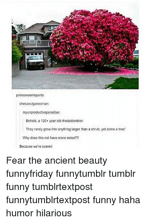 Being Alone, Funny, and Memes: iepants  shes avulgarwoman:  myunproductiveparadisc:  Behold, a 120+ year old rhododendron  They rarely grow into anything larger than a shrub, yet alone a tree!  Why does thisnot have more notes??  Because we're scared Fear the ancient beauty funnyfriday funnytumblr tumblr funny tumblrtextpost funnytumblrtextpost funny haha humor hilarious