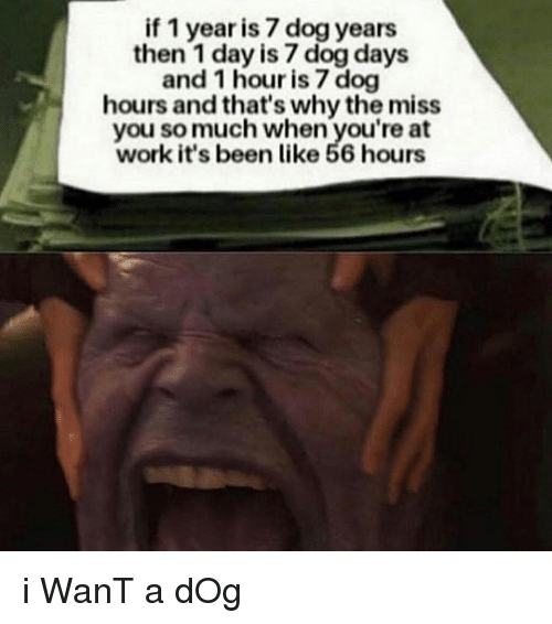 Memes, Work, and Been: if 1 year is 7 dog years  then 1 day is 7 dog days  and 1 hour is 7 dog  hours and that's why the miss  you so much when you're at  work it's been like 56 hours i WanT a dOg