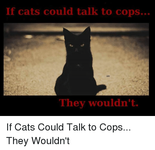 if cats could talk to cops they wouldnt if cats 2702316 if cats could talk to cops they wouldn't if cats could talk to cops
