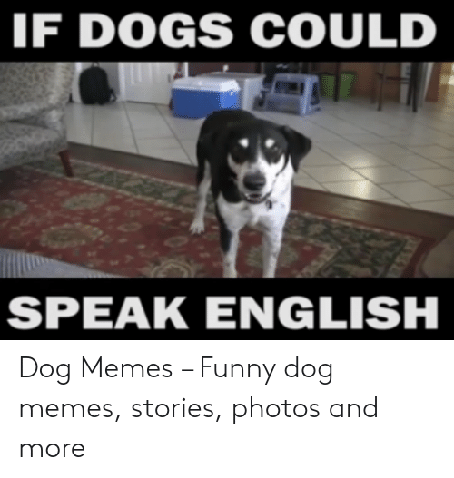 If DOGS COULD SPEAK ENGLISH Dog Memes – Funny Dog Memes Stories