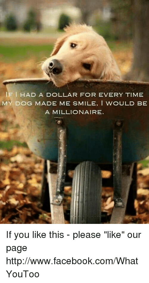 if had a dollar for every time my dog made me smile i would be alook forward memes