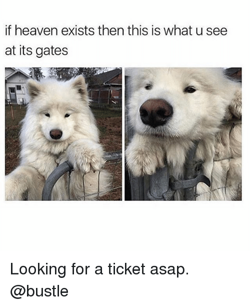 Heaven, Memes, and What U: if heaven exists then this is what u see  at its gates Looking for a ticket asap. @bustle