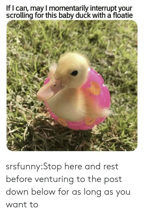 Tumblr, Blog, and Duck: If I can, may I momentarily interrupt your  scrolling for this baby duck with a floatie srsfunny:Stop here and rest before venturing to the post down below for as long as you want to