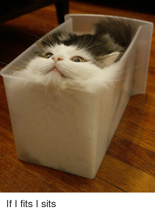 Image result for if it fits i sits meme