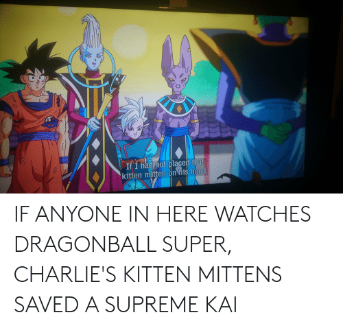 Dragonball, Supreme, and Watches: If I had mot placed that  kitten mitten on his hand. IF ANYONE IN HERE WATCHES DRAGONBALL SUPER, CHARLIE'S KITTEN MITTENS SAVED A SUPREME KAI