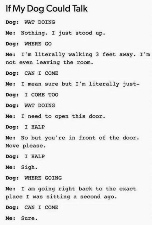 Memes, Wat, and Mean: If My Dog Could Talk  Dog: WAT DOING  Me: Nothing. I just stood up.  Dog: WHERE Go  Me: I'm literally walking 3 feet away. I'm  not even leaving the room.  Dog: CAN I COME  Me: I mean sure but I'm literally just-  Dog: I COME TOO  Dog: WAT DOING  Me: I need to open this door  Dog: I HALP  Me: No but you're in front of the door.  Move please.  Dog: I HALP  Me: Sigh.  Dog: WHERE GOING  Me: I am going right back to the exact  place I was sitting a second ago.  Dog: CAN I COME  Me: Sure.