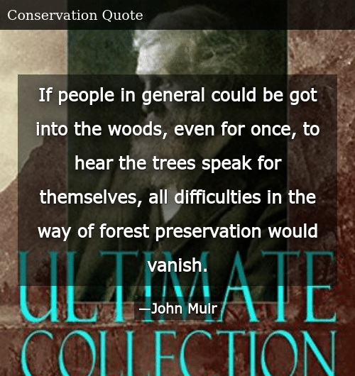 If People in General Could Be Got Into the Woods Even for ...