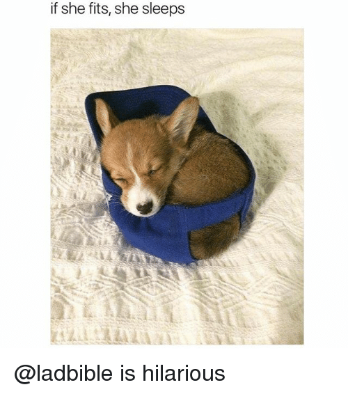 Funny, Hilarious, and She: if she fits, she sleeps @ladbible is hilarious