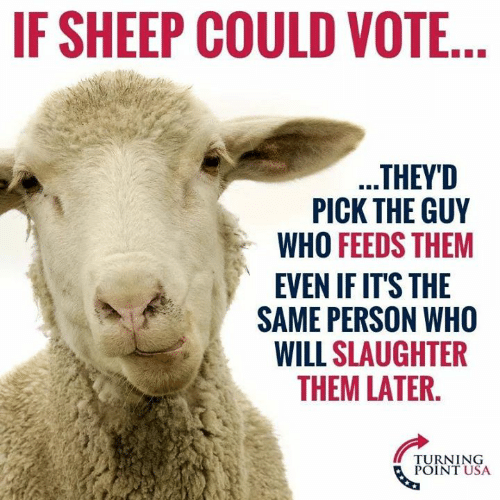 Memes, 🤖, and Usa: IF SHEEP COULD VOTE  THEYD  PICK THE GUY  WHO FEEDS THEM  EVEN IF IT'S THE  SAME PERSON WHO  WILL SLAUGHTER  THEM LATER.  TURNING  POINT USA